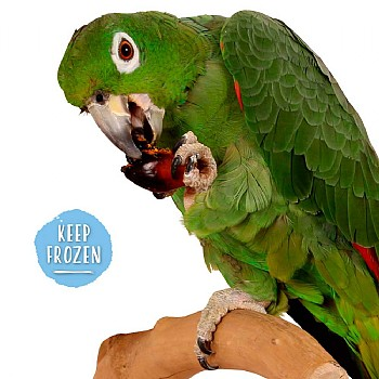 Palm Nuts - Nutritious Natural Parrot Treat