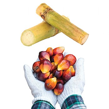 Palm Nut & Sugar Cane Treat Pack