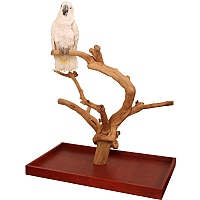 Java Tabletop Tree - Large - Natural Hardwood Parrot Stand