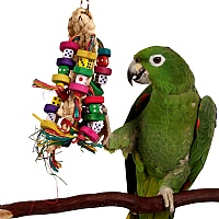 Odds On - Beak Pleaser Parrot Toy