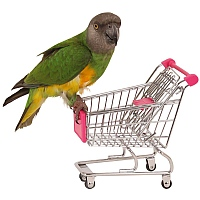 Shopping Trolley Parrot Toy