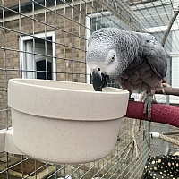 Quick Locking Parrot Food or Water Bowl - Large