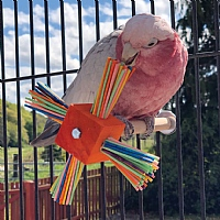 Party Perch Spinning Parrot Toy