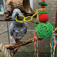 Festive Mega Munch Ball Christmas Parrot Toy