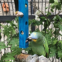 Fill Me Up - Foraging Parrot Toy - Large