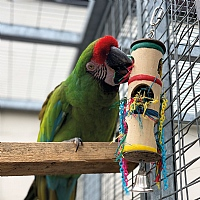 Foraging Barrel Parrot Toy