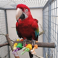 Preening Perch Wood & Rope Parrot Toy