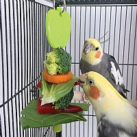 Kabob Parrot Treat Holder