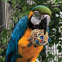 Fiesta Ball Stuffers Parrot Chews - Pack of 3