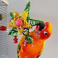 Christmas Star Parrot Toy