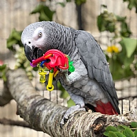 UFO Foot Toy for Parrots