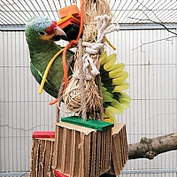 Raffia Chew Time Parrot Toy