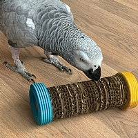 Roll Over Chewable Foraging Parrot Toy