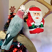 Santa Pinata - Fill Your Own Chewable Foraging Parrot Toy