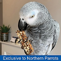 Parrot Cafe Nutri Bars Parrot Treats - Pack of 8