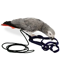 The Aviator Parrot Harness - Medium